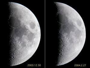 同一月齢の形比較