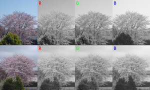 20150403桜RGB