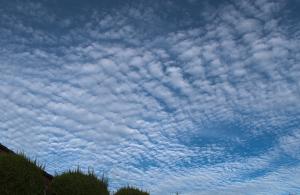 20150811夕方のうろこ雲