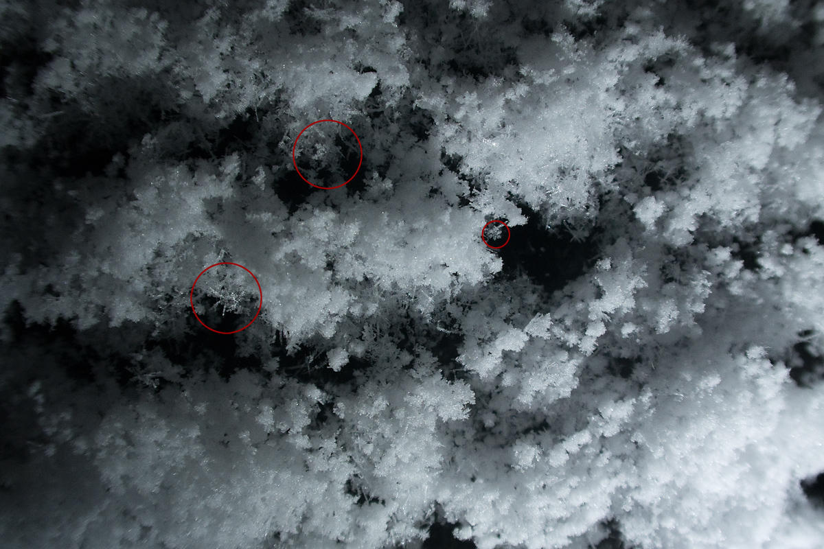 20190210明け方の雪