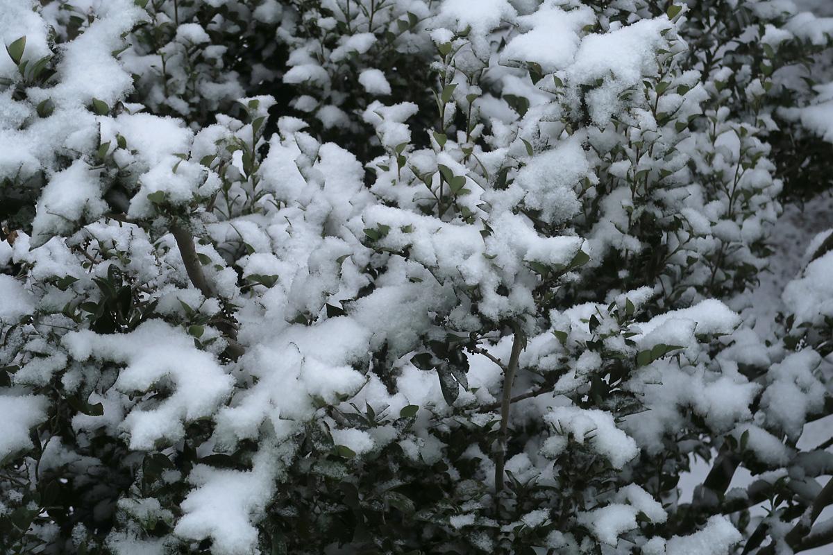 20190211積雪