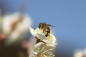 2月でも飛び回るミツバチ